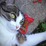 Yeowww Catnip - Ellen Letten - Stinkie Star