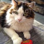 Yeowww Catnip - Michelle Doran - Stinkie