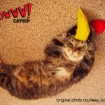 Yeowww Catnip - Julie Scott - Banana